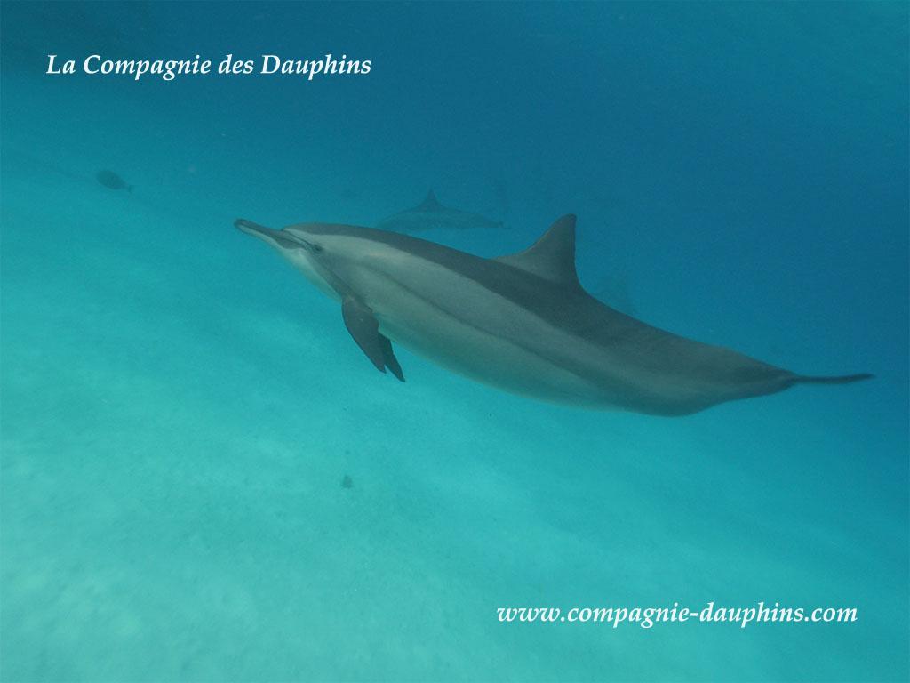 Index of nager avec les dauphins images fond ecran 2008 for Fond ecran 17 pouces