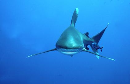 Nager avec les dauphins la compagnie des dauphins for Nager avec les dauphins nice